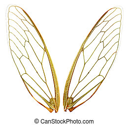 Wings wth Path - A pair of cicada wings, with clipping path...