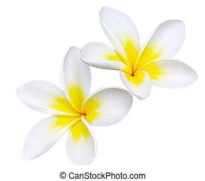 Frangipani (with Path) - Glorious frangipani or plumeria...
