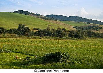 Green hills near Cerveny Klastor in Pieniny mountains,...