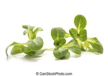 valerian leaf salad