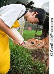 Young boy working on Costa Rican dairy farm - Young boy in...