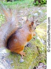 Cute squirrel eating a nut closeup