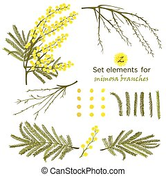 Set of hand-drawn elements for branches of mimosa. A good...