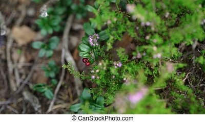 Red berries and pink flowers in a forest at summer