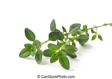 Thyme - Fresh-picked thyme sprig, isolated on white.