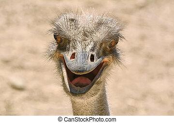 Portrait of Ostrich - Close-up Portrait of Ostrich