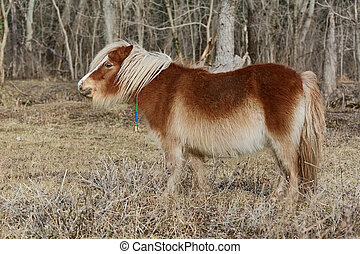 Little Brown Pony - Little Pony Grazes near the Forest