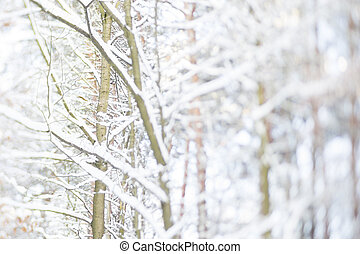 tree with snow in a forest