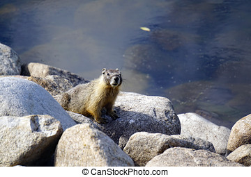 Inquisitive Marmot