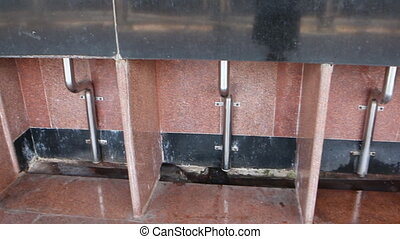 Black rat Rattus rattus climbs at railway station. India -...