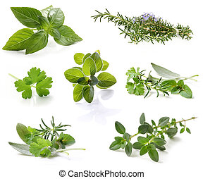 Herb Collection - Collection of fresh herbs, isolated on...