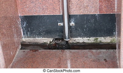 Black rat in station toilet. India - Spread infection. Black...