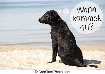 Dog, Beach, Wann Kommst Du Means When Are You Coming -...