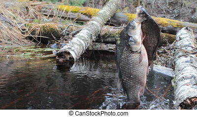 Fresh fish and old ways of its preservation 7. Prussian carp...