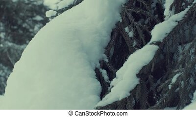 Fir tree in the snow, snowfall. - Fir tree in the snow....
