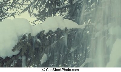 Fir tree in the snow, snowfall. - Fir tree in the snow. Snow...