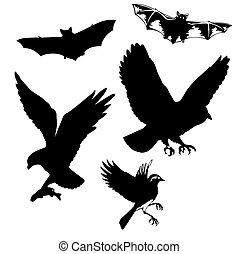 vettore, illustrazione, Uccelli, pipistrelli, bianco, fondo