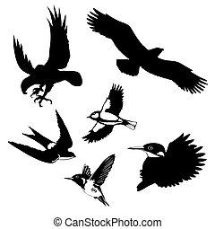 vettore, illustrazione, Uccelli, bianco, fondo