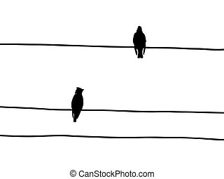 vector silhouette of the waxwings on wire
