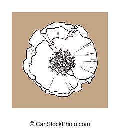 Open chamomile blossom, top view, sketch style vector...