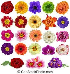 花, 彙整
