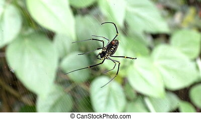 close up spider on web in tropical forest. - close up video...
