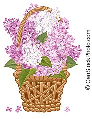 Lilac in basket - Gentle fragrant violet and white branches...
