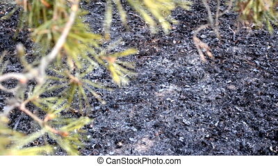 Implications of ground fire in pine woods 2. Forest floor...