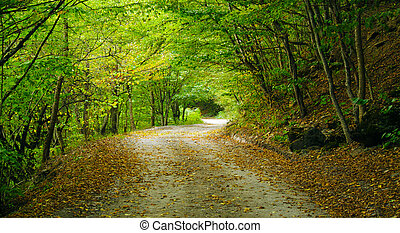 Road in the woods - Mountain road in the forest of the North...