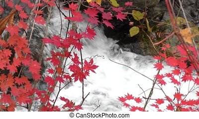Red maple leaves in front of white brook stream