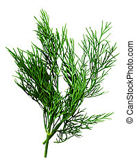 fresh dill herb isolated on the white