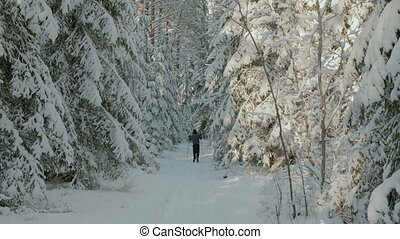 Skiers in the snowy winter forest