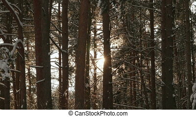 Sun's rays through the branches of trees