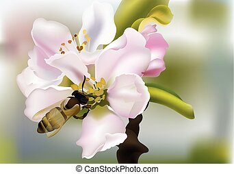Cherry flowers Realistic Vector illustration with bee collecting pollen. Beautiful Spring floral Background