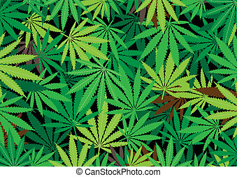hemp background - The green hemp, cannabis leaf background...