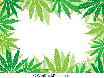 hemp white background - The green hemp, cannabis leaf white...