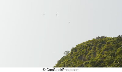 Eagles flying in the sky near the hill. (Shot in 4K -...