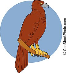 Australian Wedge-tailed Eagle Perch Drawing - Drawing sketch...