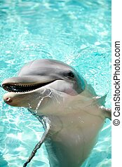Dolphin greetings - Dolphin rising out of the water to have...