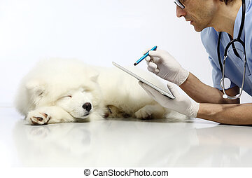 Veterinarian examining dog with digital tablet, in vet clinic table