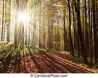 view from autumnal hardwood forest with sun beam - european...