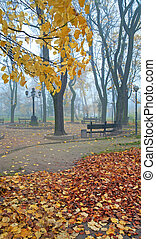 Foggy morning in autumn park - Last golden tree leafs and...