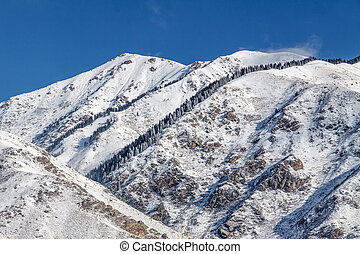 Winter snowy mountains with fir-trees - The conifers on...