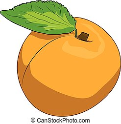 Apricot - A yellow ripe apricot with a green leaf.
