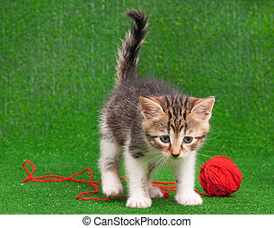 Kitten playing red clew thread