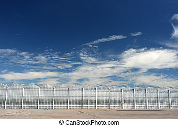 Greenhouses - Row of modern industrial greenhouses with blue...