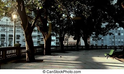 Solitary Pigeon In The Park - Solitary Pigeon in a park in...
