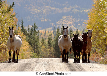 Range horses along British Columbia road