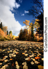 clouds and autumn leaves along British Columbia backroad