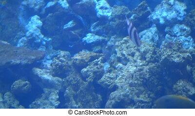 exotic Aquarium fishes swim in sea blue water